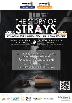 The Story of Strays